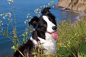 DOG 01 LS0059 01