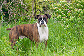 DOG 01 LS0069 01