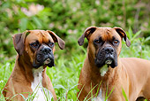 DOG 01 LS0072 01