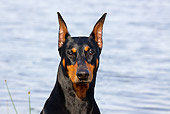 DOG 01 LS0075 01