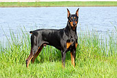 DOG 01 LS0076 01