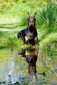 DOG 01 LS0077 01