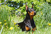 DOG 01 LS0078 01