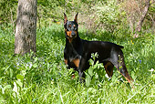 DOG 01 LS0079 01