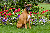 DOG 01 LS0081 01