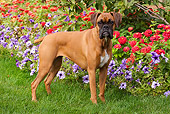 DOG 01 LS0082 01