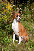 DOG 01 LS0084 01
