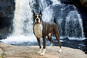 DOG 01 LS0089 01