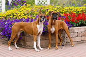DOG 01 LS0090 01