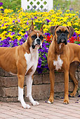 DOG 01 LS0091 01