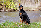 DOG 01 LS0096 01
