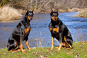 DOG 01 LS0097 01