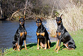 DOG 01 LS0098 01
