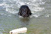 DOG 01 LS0102 01