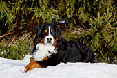 DOG 01 LS0103 01