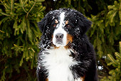 DOG 01 LS0105 01
