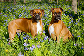 DOG 01 LS0106 01