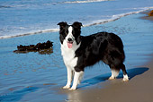 DOG 01 LS0113 01