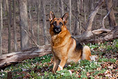 DOG 01 LS0114 01