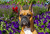DOG 01 LS0115 01