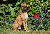 DOG 01 LS0116 01