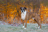 DOG 01 LS0117 01