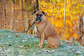 DOG 01 LS0119 01