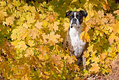 DOG 01 LS0122 01