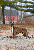 DOG 01 LS0125 01