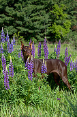 DOG 01 LS0134 01