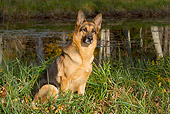 DOG 01 LS0135 01