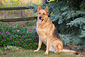 DOG 01 LS0137 01