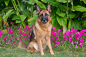 DOG 01 LS0138 01