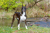 DOG 01 LS0142 01