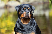 DOG 01 LS0148 01