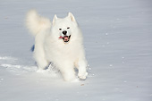 DOG 01 LS0150 01