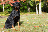 DOG 01 LS0154 01