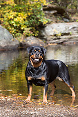 DOG 01 LS0155 01