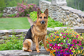 DOG 01 LS0159 01
