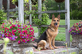 DOG 01 LS0160 01