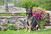 DOG 01 LS0163 01