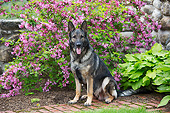 DOG 01 LS0164 01