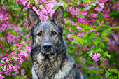 DOG 01 LS0165 01