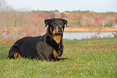 DOG 01 LS0167 01