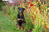 DOG 01 LS0169 01