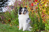 DOG 01 LS0171 01