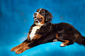 DOG 01 MQ0003 01