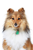 DOG 01 NR0039 01