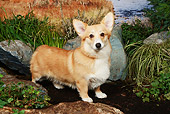 DOG 01 NR0047 01