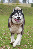 DOG 01 NR0065 01